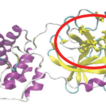 Molecular docking of secondary metabolites ...